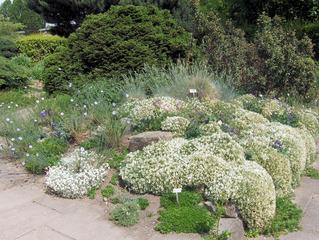 Steingarten - Steingarten, Steine Garten, Pflanzen, Natur, trocken, Alpen, Beet, Blumen, Blüten