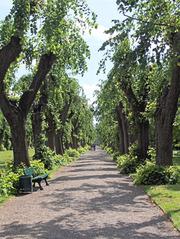 Allee im Park - Allee, Linden, Baum, Bäume, Stamm, Stämme, alt, knorrig, Weg, Perspektive, Fluchtpunkt, spazieren, Ruhe, Sonne, Licht, Schatten Parkbank, Symmetrie, symmetrisch, grün