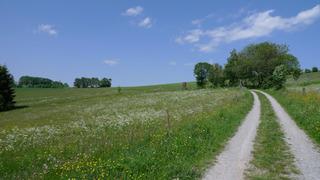 Weg in der Rhön - Weg, Wege, Wiese, Landschaft, Meditation, Fluchtpunkt