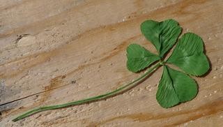 Kleeblatt - Klee, Glücksklee, Glück, Schmetterlingsblütler, Glücksbringer, Glückssymbol, Mutation, Silvester, Jahreswechsel, Symbol, vier