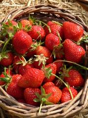 Erdbeeren # 2 - Erdbeere, rot, Obst, Sommer, süß, Frucht, reif