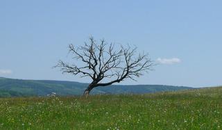 Wiese mit totem Baum - Wiese, Landschaft, Baum, Meditation, alt, abgestorben, Totholz, Verfall