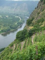 Moseltal - Mosel, Wein, Landwirtschaft, Terassenanbau, Fluss, Rheinland-Pfalz