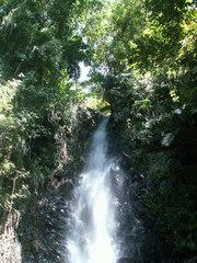Wasserfall - Wasserfall, Wasser, grün, Pflanzen, Bach