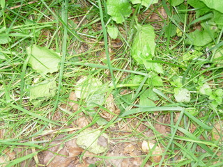 Frosch #5 - Frosch, Anpassung, anpassen, Umwelt, Tarnung, Tarnfarbe
