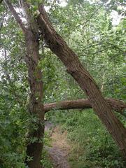 A-Bäume - Baum, Bäume, Stamm, Wald, Natur