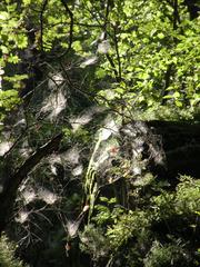 Wunder der Natur - Herbst  - Spinne, Spinnennetz, Natur, Spinnengewebe, Herbst
