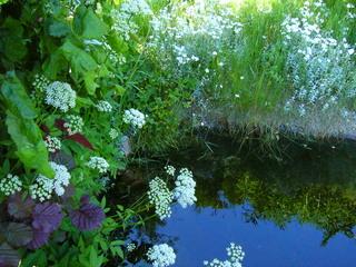 Frühlingsimpression - Natur, Teich, Wasser, Ufer