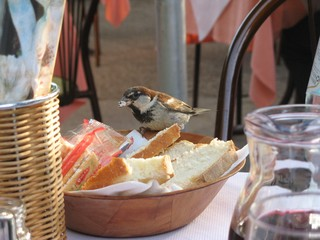 Frecher Spatz #2 - Sperling, Spatz, Singvögel, Vogel, zutraulich, neugierig, hungrig, Schreibanlass, witzig, Brotkorb