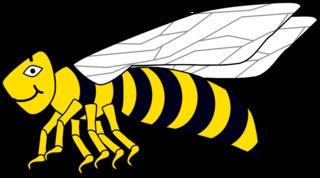 Wespe #1 - Wespe, Hautflügler, Sechsbeiner, Feldwespe, Insekt