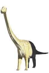 Dinosaurier - neue Gattung (hartsaurusklexus ;-)) - Dinosaurier, Dino, Saurier, Reptil, Wirbeltier, Anlaut D