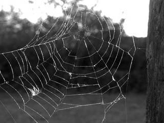 Spinnennetz - Netz, Spinnennetz, Spinne