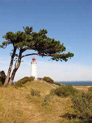 Leuchtturm # 2 - Leuchtturm, Leuchtfeuer, Signal, Schifffahrt, Seefahrt, Hiddensee, Insel, Ostsee, leuchten, warnen, steuern, Markierung, Seezeichen, Windflüchter, Kiefer, Baum