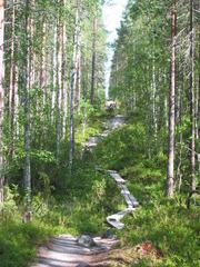 Oulanka Nationalpark  - Oulangan kansallispuisto, Finnland, Nationalpark, wandern, Freizeit, Landeskunde, Noreuropa, Geografie, karhunkierros, Bärenpfad, Bärenrunde, Gesprächsanlass, Schreibanlass, Natur