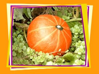 Kürbis - Kürbis, Herbst, Geburtstag, email, Gruß, Effektbild, Grußkarte