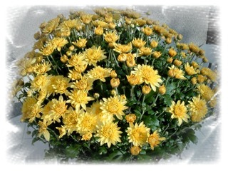 Gelbe Herbstastern - Astern, Herbstastern, Blumengruß, Geburtstag, email, Gruß, Effektbild, Grußkarte
