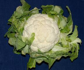 Blumenkohl - Blumenkohl, Kohl, Karfiol, Käsekohl, Blütenkohl, Traubenkohl, Italienischer Kohl, Blütensprossen, Blütengemüse