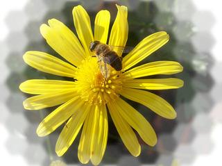 Blume mit Biene - Blume, Blüte, Biene, Blumengruß, Geburtstag, email, Gruß, Effektbild, Grußkarte