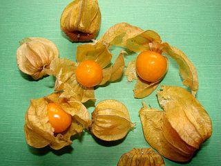 Physalis - Physalis, Kapstachelbeere, Andenbeere, Blasenkirsche, Judenkirsche, Nachtschattengewächs, zweikeimblättrige, Vitamie, süß, Frucht