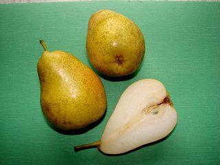 Birne - Birne, Anlaut B, Kernobst, Rosengewächs, süß, Kerngehäuse, Stiel