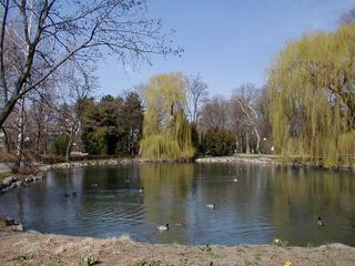 Teich im Frühjahr - Teich, Frühjahr, Wildenten, Gewässer, künstlich, Biotop