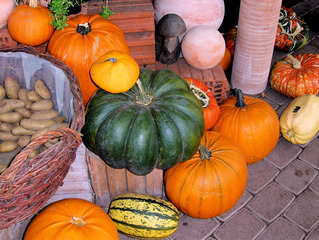Kürbisse - Kürbis, Kürbisse, grün, gelb, orange, Gemüse, Lebensmittel, Nahrung, Herbst