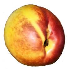 Nektarine #1 - Nektarine, Nektarinen, Obst, Frucht, Steinobst, rot, gelb, orange, süß