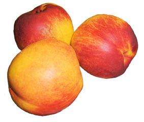 Nektarine #2 - Nektarine, Nektarinen, Obst, Frucht, Steinobst, drei, süß, gelb, rot