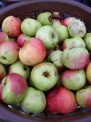 Äpfel - Apfel, Äpfel, Obst, essen, eigener Anbau, viel