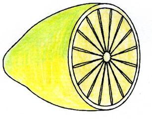 Zitrone - Zitrone, Obst, Frucht, sauer, Anlaut Z, gelb