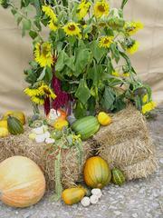 Herbst-Dekoration - Herbst, Kürbisse, Kürbis, Sonnenblume, Stroh, Dekoration, Stillleben