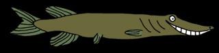 Hecht - Hecht, Raubfisch, Rückenflosse, Flosse, Anlaut H