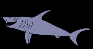 Hai #1 - Hai, Haie, Meerestier, Fisch, Zähne, spitz, Knorpelfisch, Anlaut H, Angriff, scharf, gefährlich, Gefahr, böse, Flosse
