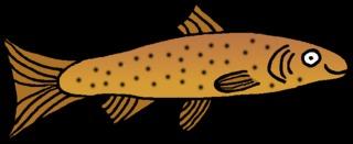 Forelle #3 - Forelle, Forellenfisch, Speisefisch, Fisch, Anlaut F, Flosse