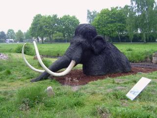 Mammut - Altsteinzeit, Mammut, Evolution