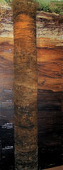 Totes Moor - Bohrkern - Moor, Hochmoor, Regenmoor, nass, sumpf, Sauerstoffmangel, Torf, Abbau, Schichten, organisch, Niederschlag, alt, Moos, sauer, Ökologie, Boden, Naturschutz, Bohrkern