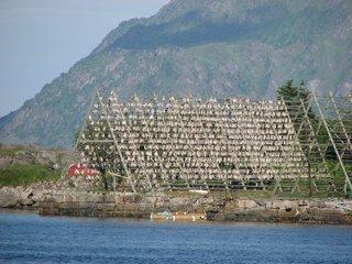 Stockfisch auf Trockengerüst - Stockfisch, Konservieren, Norwegen, Haltbarmachung, trocknen, Trocknung, Entwässern, Trockenfisch, Stockgestell