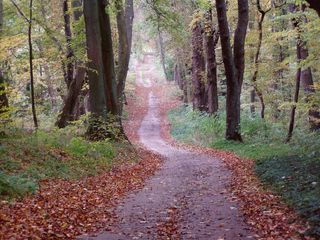 Wege#7 - Weg, Wege, Herbst, Meditation, Jahreszeit, Herbstwald, Wald