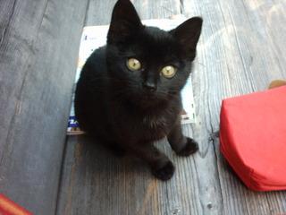 neugierig guckende junge Katze - Säugetier, Katze, Jungtier, schwarz, Kätzchen, Kindchenschema