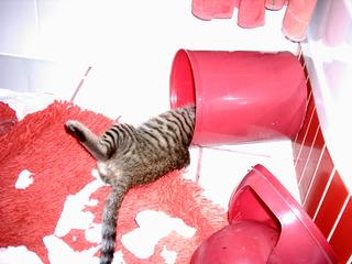 Katze im Mülleimer - Biologie, Katze, forschen, Schreibanlass