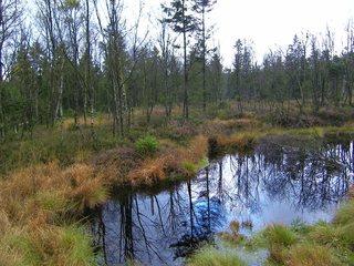 Moor 2 - Moor, Landschaft, Landschaftsform, Hochmoor, Feuchtgebiet, Solling, Wasser, Sumpf, Birken, Naturschutzgebiet