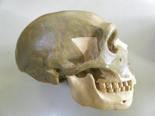Neandertaler - Neandertaler, Schädel, Urmensch, Mettmann, Fuhlrott, Knochen, Gebiss, Skelett