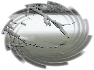 Zweige im Schnee, Sylvester 2009 - Schnee, Winter, Ruhe, Spaziergang, Zweige, See, Eis, Grußkarte, Gruß, Effektbild