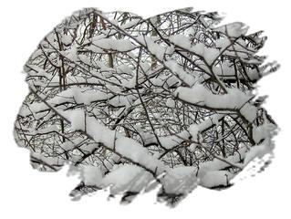 Zweige im Schnee, Sylvester 2009 - Schnee, Winter, Zweige, Spaziergang, Grußkarte, Gruß, Effektbild