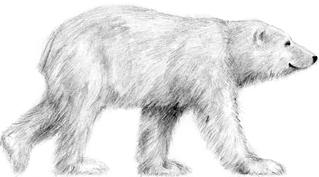 Bär - Bär, Anlaut B, Raubtier, Säugetier, Eisbär, Anlaut Ei
