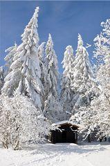 Winterimpressionen - Winter, Frost, Eis, Raureif, Reif, frieren, eisig, kalt, Schnee, Schneebruch, Fichte, Nadelbaum, Schutz, Schutzhütte