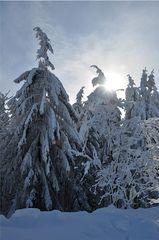 Winterliche Fichten # 1 - Winter, Frost, Eis, Raureif, Reif, frieren, eisig, kalt, Schnee, Schneebruch, Fichte, Nadelbaum