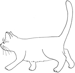 Katze geht - Katze, Kätzchen, Haustier, laufen, gehen, Anlaut K, Illustration, Wörter mit tz