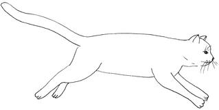 springende Katze - Katze, Kätzchen, Haustier, Sprung, springen, Anlaut K, Illustration