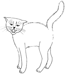 fauchende Katze - Katze, Kätzchen, Haustier, fauchen, Katzenbuckel, Anlaut K, Illustration